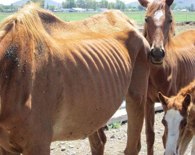 Report Animal Cruelty - Colorado Humane Society & SPCA : Colorado